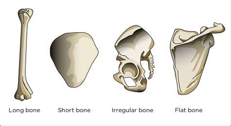 Illustration Used In Gr 4-6 Natural Sciences