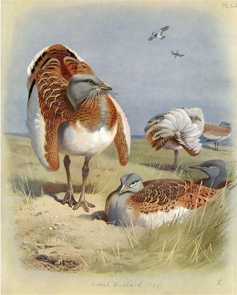 images  archibald thorburn  pinterest