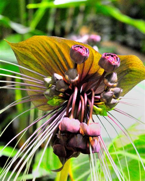 72101 Swallowtail Seeds Coupon by Buy Seeds Grow A Butterfly Garden Plant Flowers