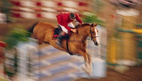 horse horses breeds body getty blooded warm stockbyte glycogen animals repletion weight intense research help olympic deworming affect stable management