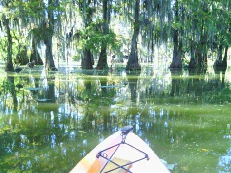 Louisiana, constituent state of the united states of america. Places to Visit in Louisiana With Kids