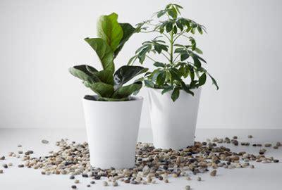 menanam tanaman hias kebun sayuran
