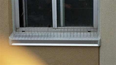 Window Sill Spikes by Pigeon Removal Kitchener Embo Pest