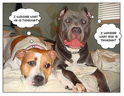 Adopting A Pit Bull Breeding Dogs Have Dog Blog Will Travel