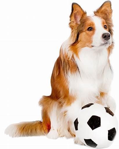 Dog Paw Grand Soccerball Soccer Luxury Pet