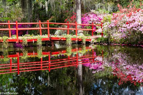 magnolia plantation gardens charleston sc magnolia plantation and gardens charleston south carolina
