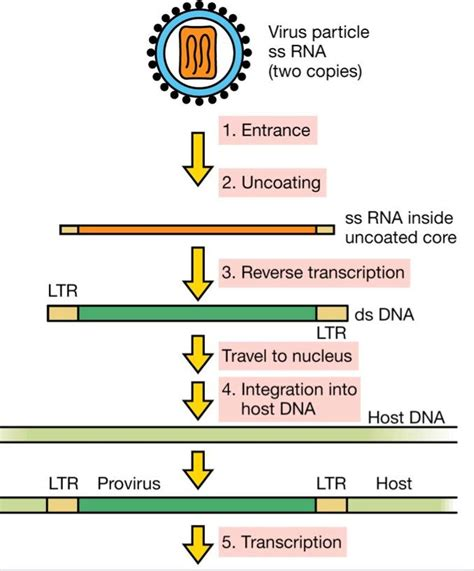 Virus Ii At University Of New Hampshire At