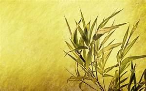 HD Simple Bamboo Wallpaper | Download Free - 91408