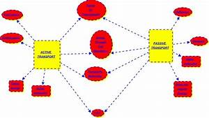Benjamin--Compare active and passive transport