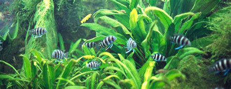 freshwater planted aquarium detailed info  subject