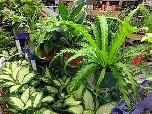 Houseplants, Tropical, Plants, And, Blooming, Plants