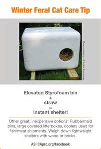 feral cat shelters for winter indyferal outdoor cat shelters and feeding stations