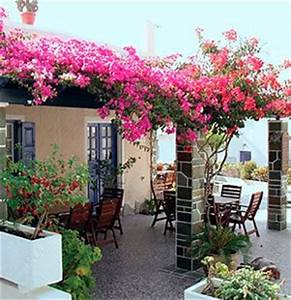 Bougainvillea Trellis   www.pixshark.com - Images ...