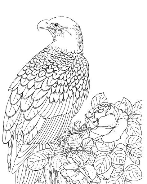 bald eagle template eagle head coloring page coloring pages