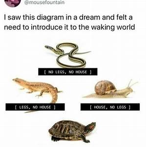 House Legs Dream Snake Turtle Lizard Snail