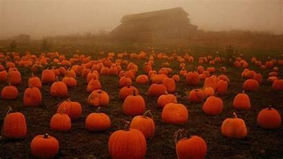 Halloween Fog Pumpkins Spooky Sign Pumpkin Fall
