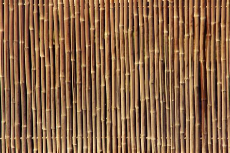 bamboo fence texture  photo