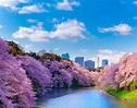 千鳥淵綠道 / 東京旅遊官方網站GO TOKYO