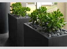 Low maintenance plants in lightweight planters The Urban