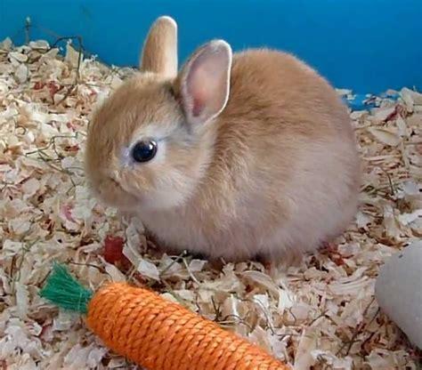 quelle nourriture pour mon lapin nain