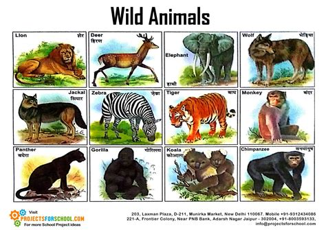 Kids Science Projects Wild Animals Free Download