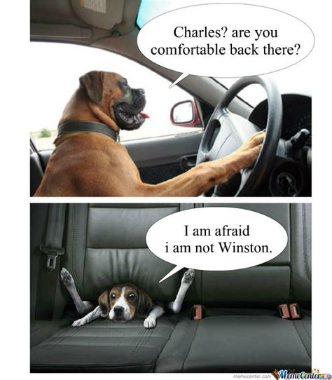 Funny Memes About Driving - let a dog drive they said by callmemike meme center