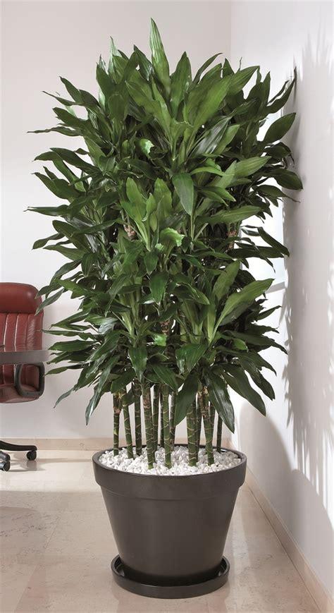pianta da interno arreda con il verde florpagano di antonio pagano piante e
