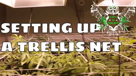 Best Place To Buy Trellis by Setting Up A Trellis Net For An Increased Yield Netting