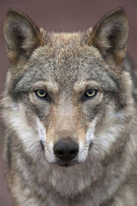 der wolf und kein ende panorama