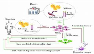 Strategy For Msc Transplantation In Pd Patients  Mscs Can