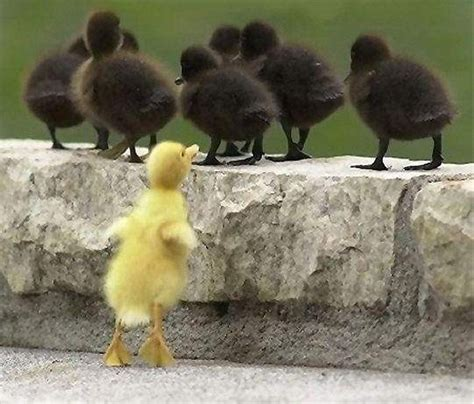Be The Best By Being Different | Marc's Blog