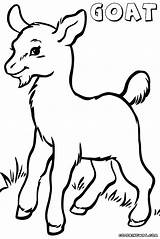 Goat Coloring Pages Mountain Head Baby Drawing Clipart Cute Draw Animal Clipartmag Getdrawings Colorings sketch template