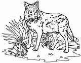 Wolf Coloring Coloriage Loup Chien Animaux Printable Theme Bestappsforkids 1001 Tigre Mandala Therecipeworld sketch template