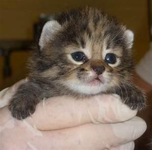 Some adorable newborn kittens at Audubon Center... - The ...