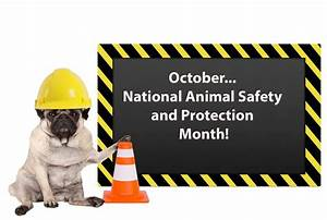 National, Animal, Safety, And, Protection, Month, U2013, October, 2021