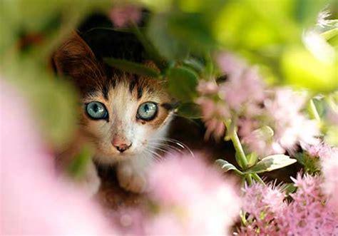 plants   poisonous  dogs  cats