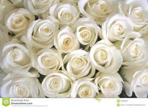 white roses background stock photo image 16056820