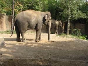 Asian Elephant Habitat - Rivers Edge » Saint Louis Zoo Gallery