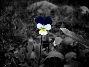 fleurs noir et blanc With déco chambre bébé pas cher avec dictionnaire fleurs de bach