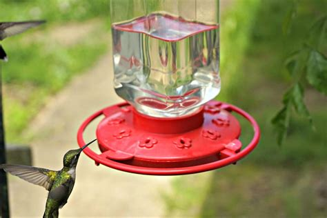 It's Time To Put Out Your Hummingbird Feeders