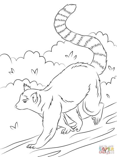 lemur coloring pages   print