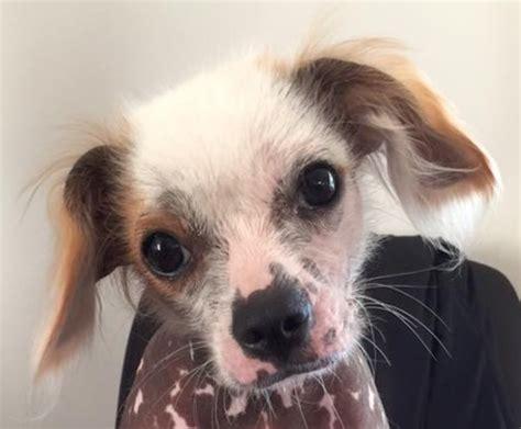 Cnbnews  Ee  Pet Ee   Tip Of The Week  Ee  Adopting Ee   An Older  Ee  Dog Ee