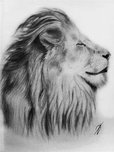Lion Pencil Drawing by BBoyJmE on DeviantArt