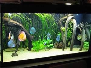 Idee Decoration Aquarium : id e d cor aquarium pour discus ~ Melissatoandfro.com Idées de Décoration