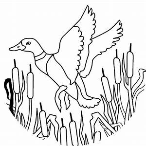 How To Draw Flying Mallard Duck Coloring Pages Color Luna