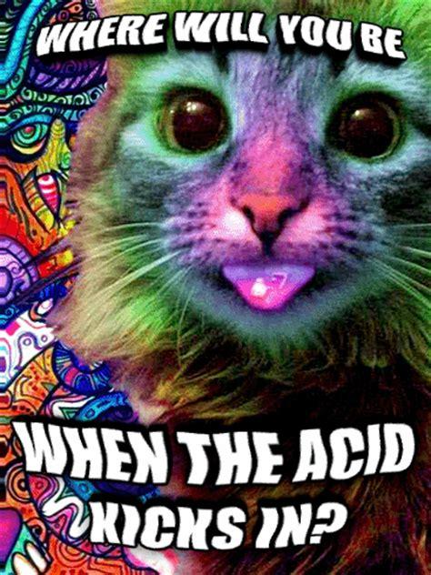 Lsd Memes - livememe com lsd cat