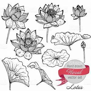 Dessin Fleurs De Lotus : vector set of hand drawn lotus flowers and leaves sketch floral fleurs de lotus vecteur ~ Dode.kayakingforconservation.com Idées de Décoration
