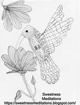 Coloring Pages Hummingbird Hummingbirds Bird Humming Resources sketch template