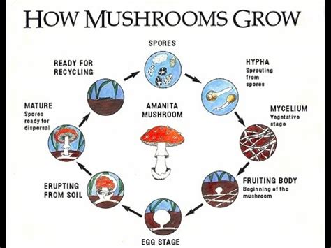 how do mushrooms grow how to grow mushrooms youtube