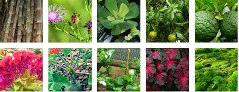 nama latin tumbuhan tanaman hias  perlu diketahui